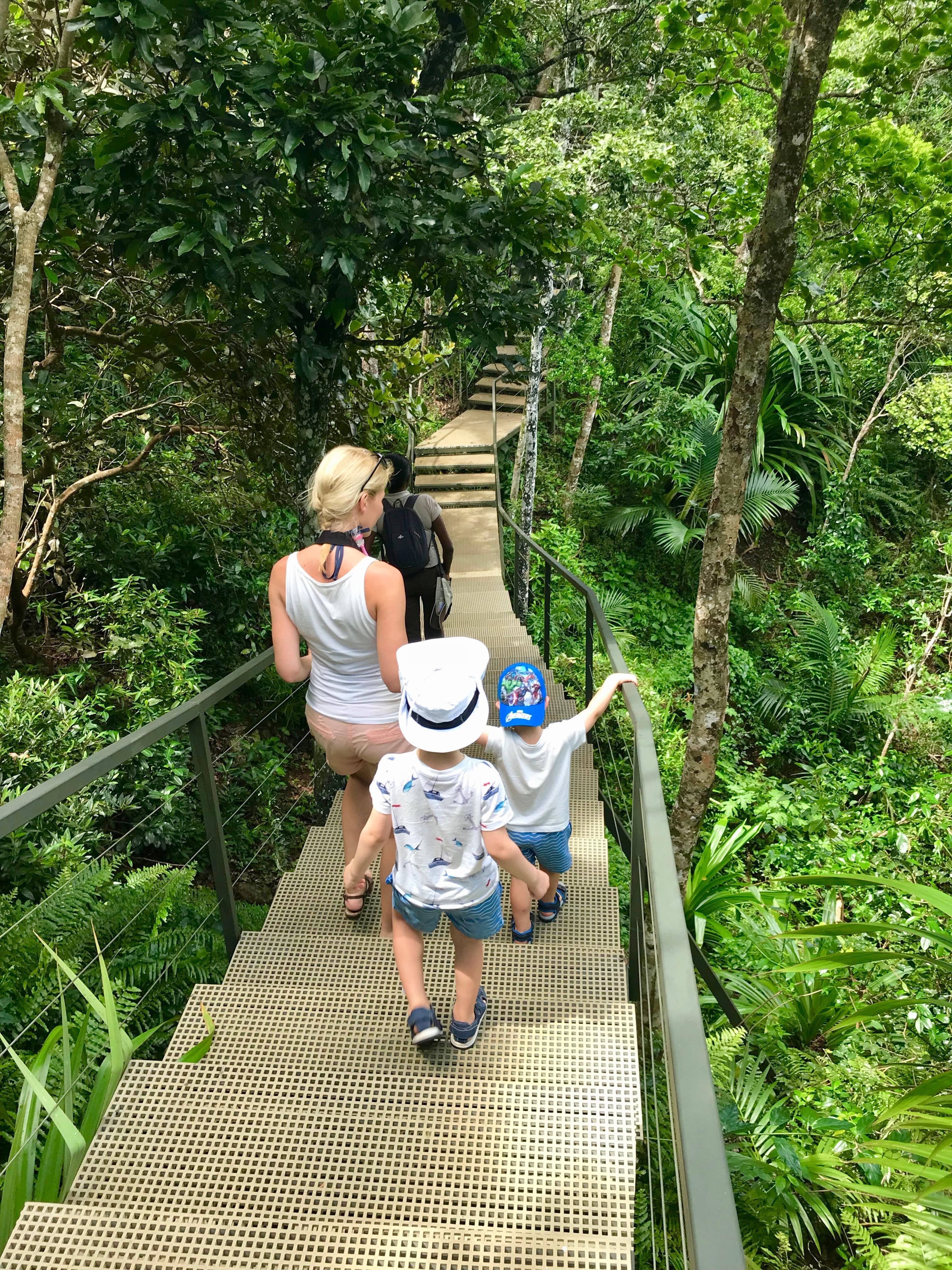 vandring på spångar genom djungeln