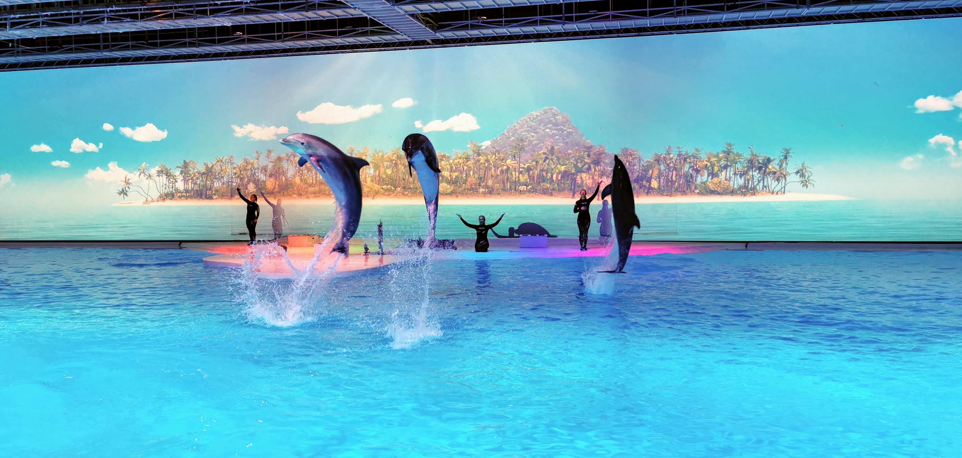delfiner på Kolmårdens djurpark