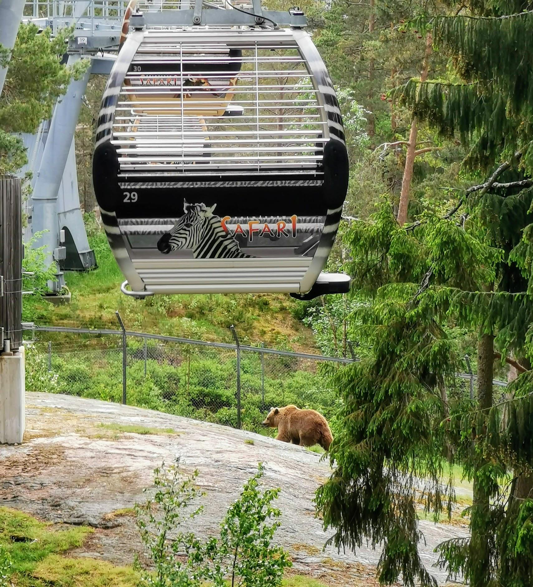 Linbanan på Kolmårdens djurpark