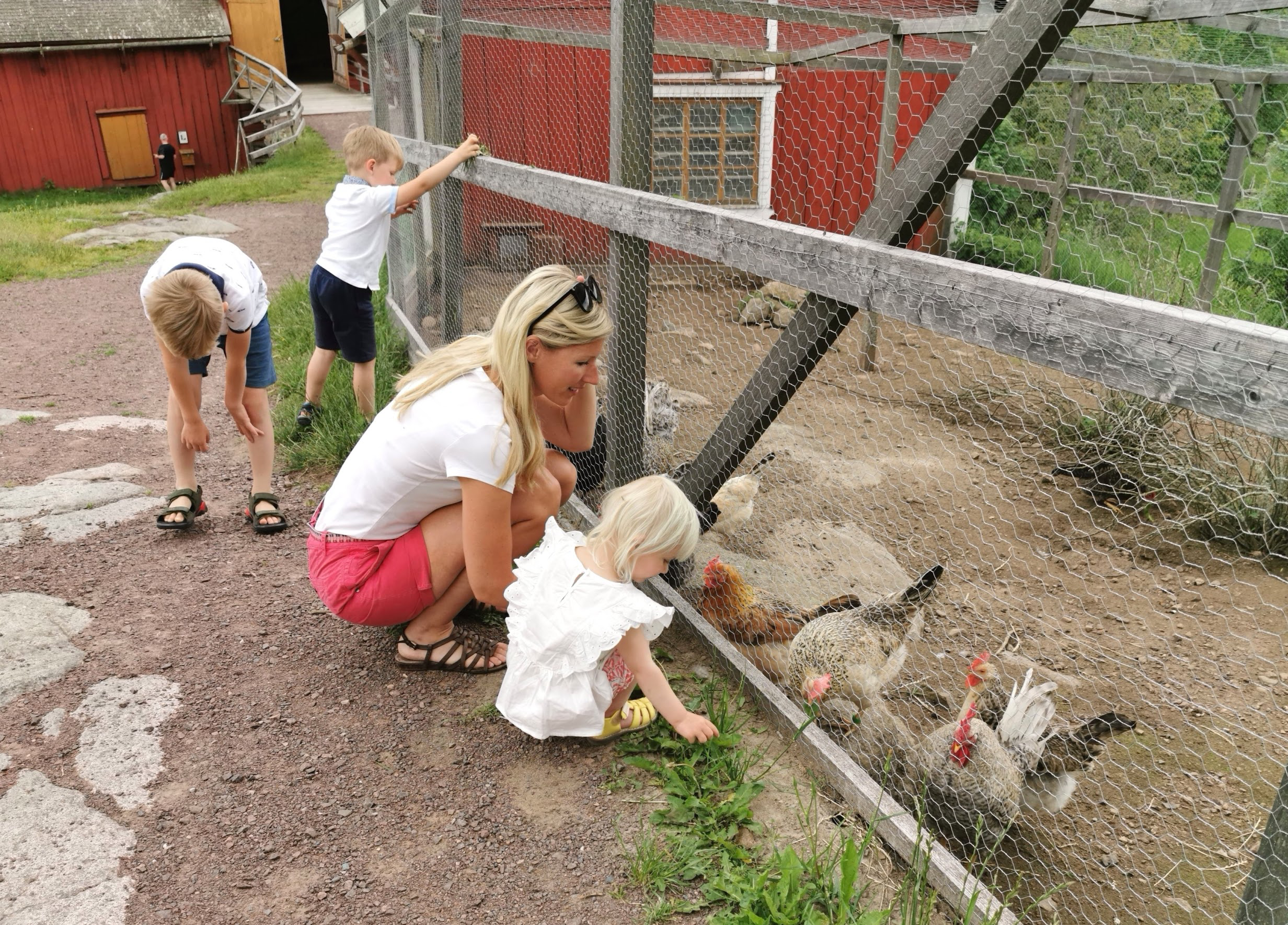 Åsensby Animals