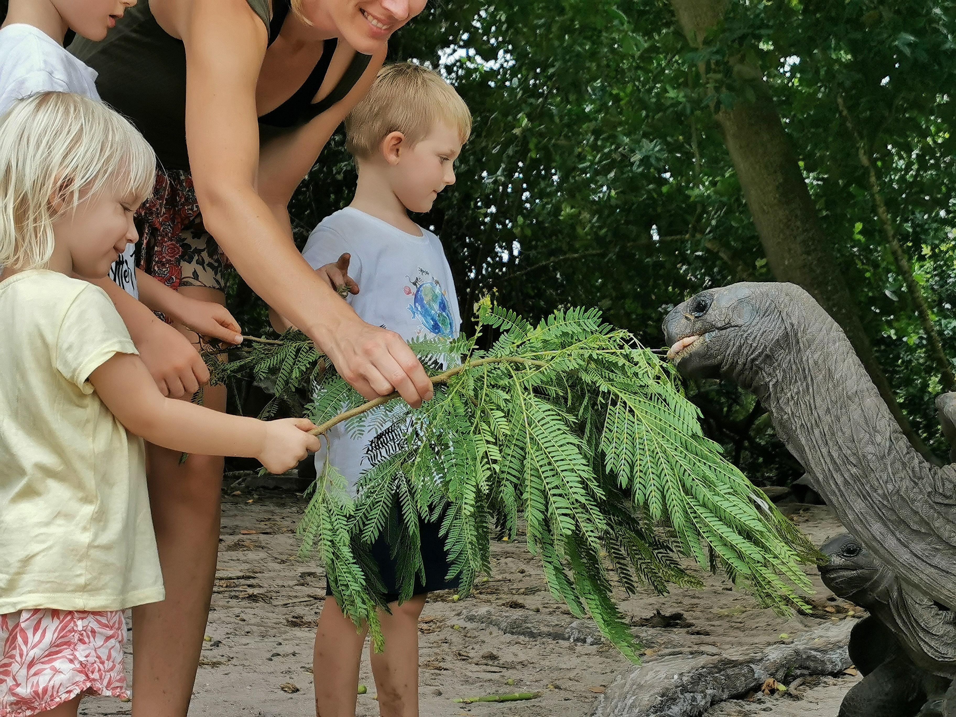 Curieuse Seychellerna med barn