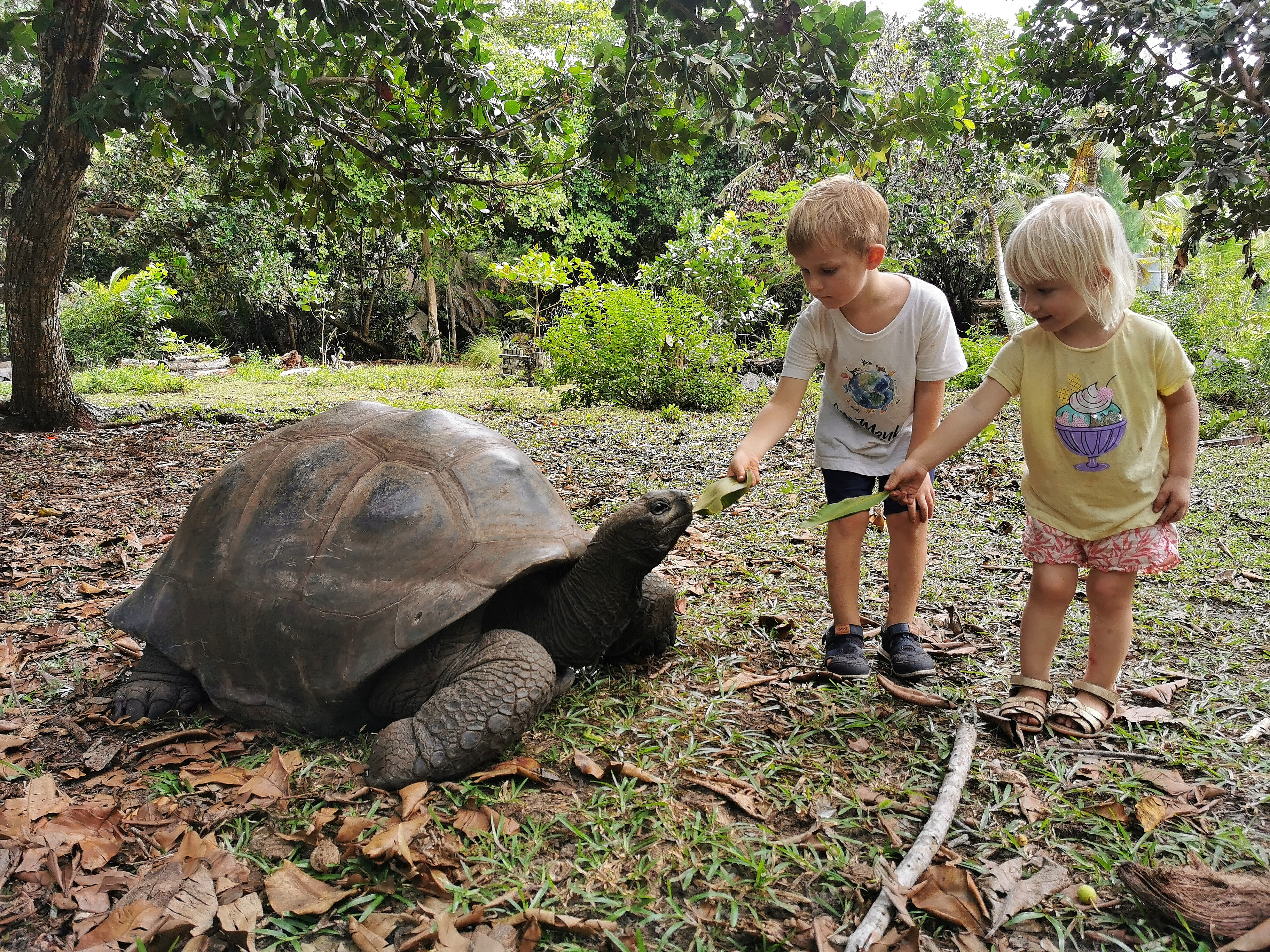 Curieuse seychelles with kids
