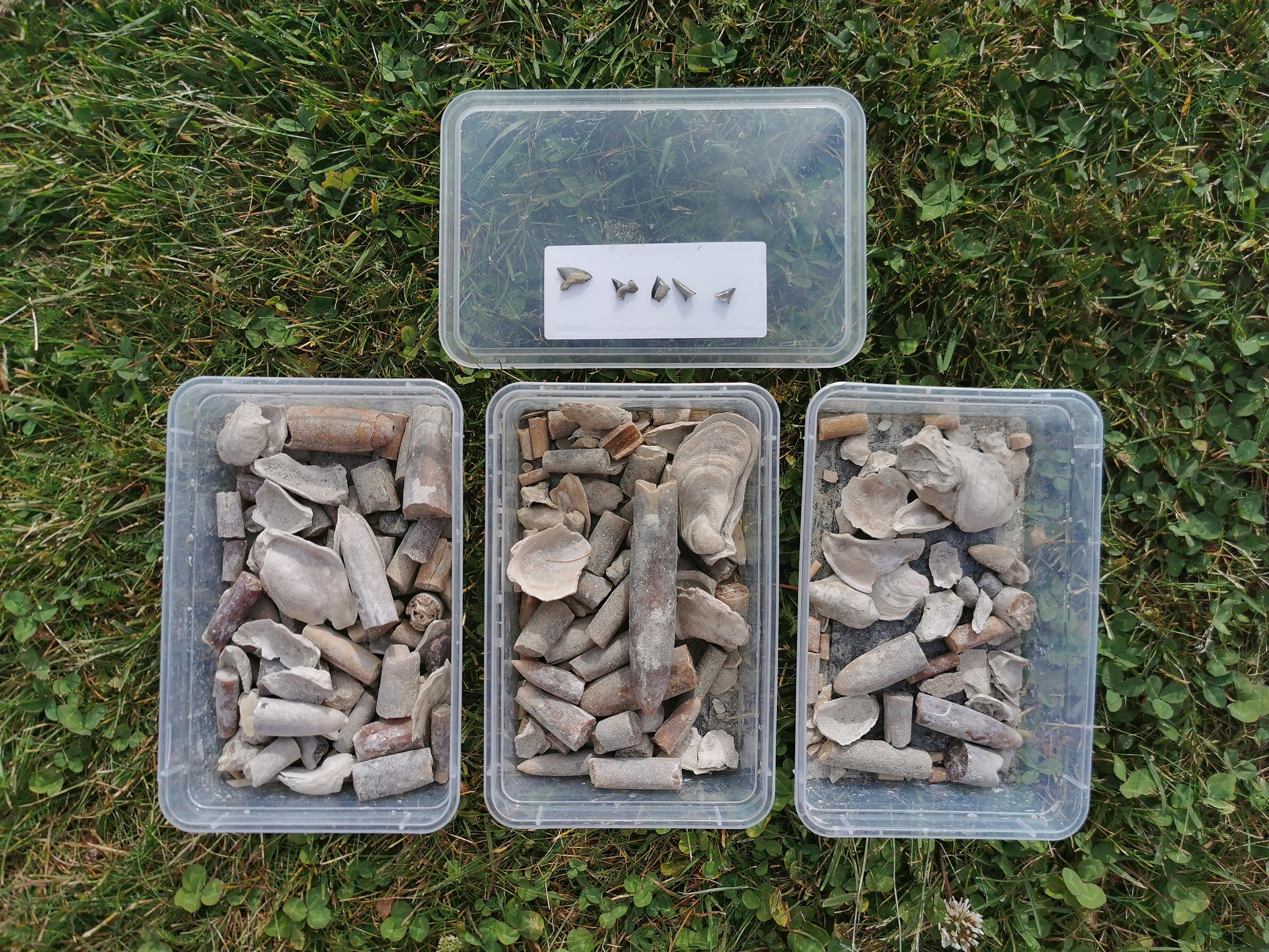 Fossil i Sverige
